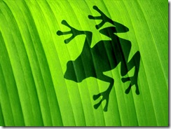 silhouette-frog